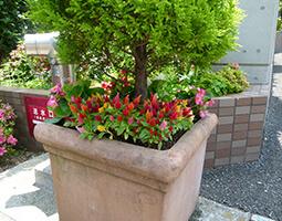 定期植栽管理事例